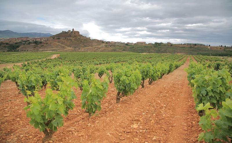 bodegas-vinedos-sierra-cantabria